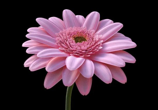 flowerrrr.jpg