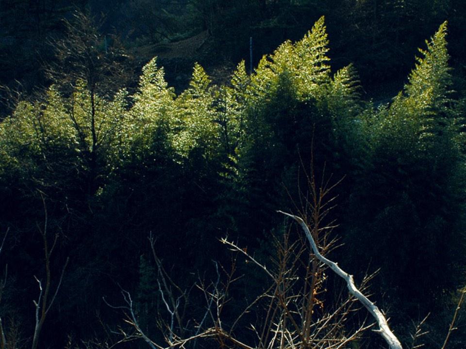 숲의 실루엣