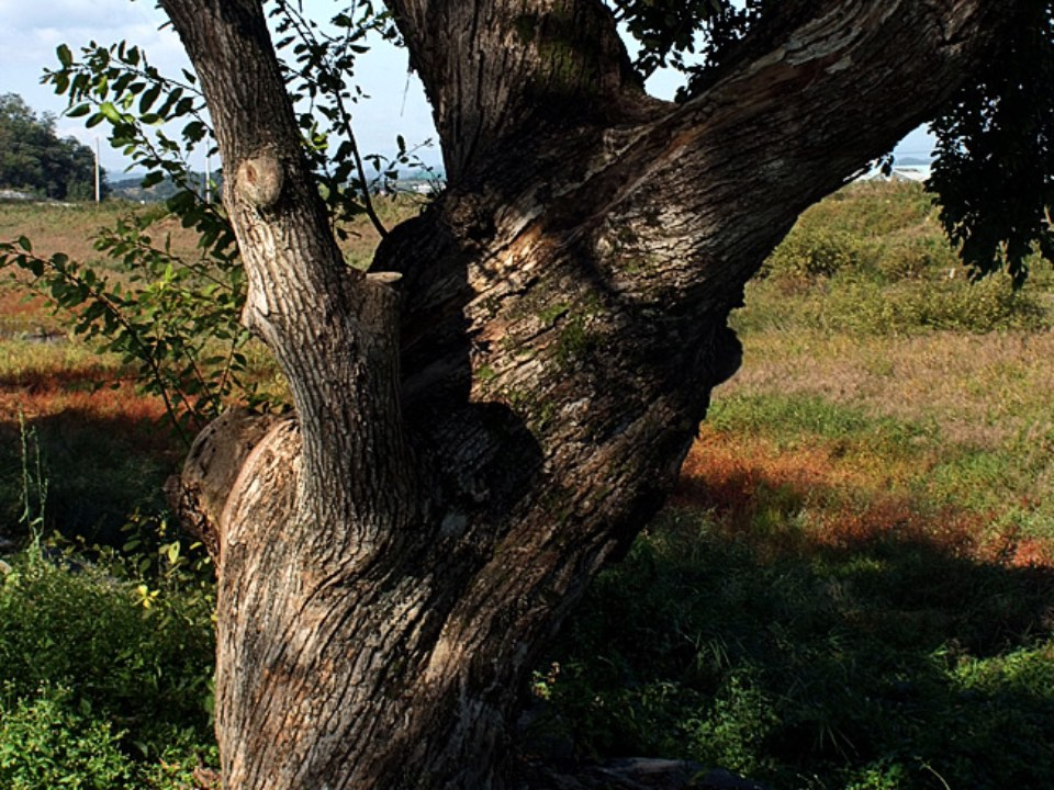 하나의 나무