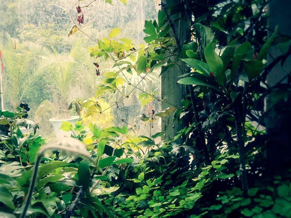 식물원 내부