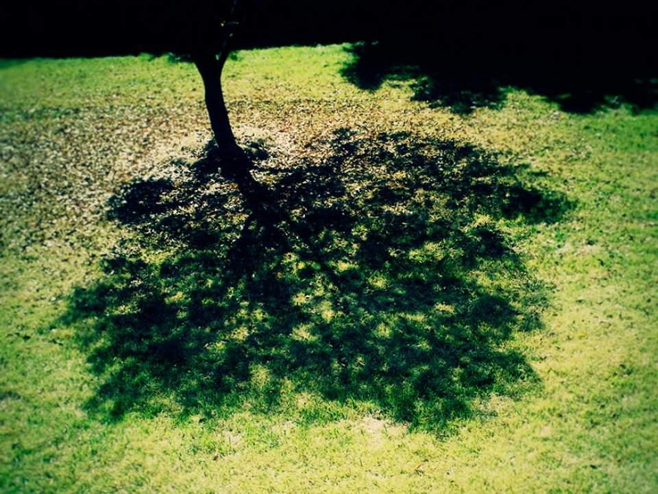 나무의 모습