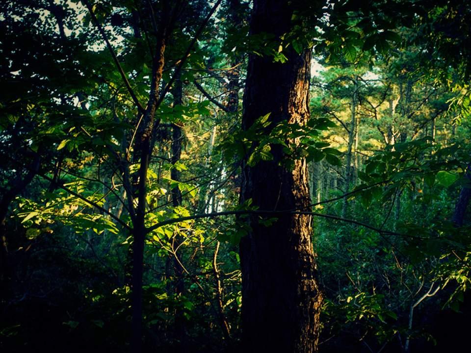 작은 숲속에서