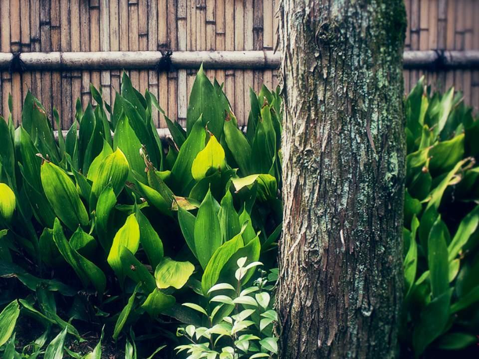 대나무 벽을 배경으로..
