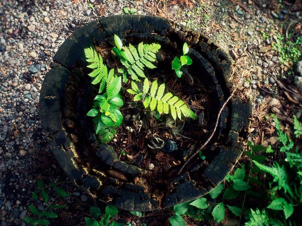 작은 식물들