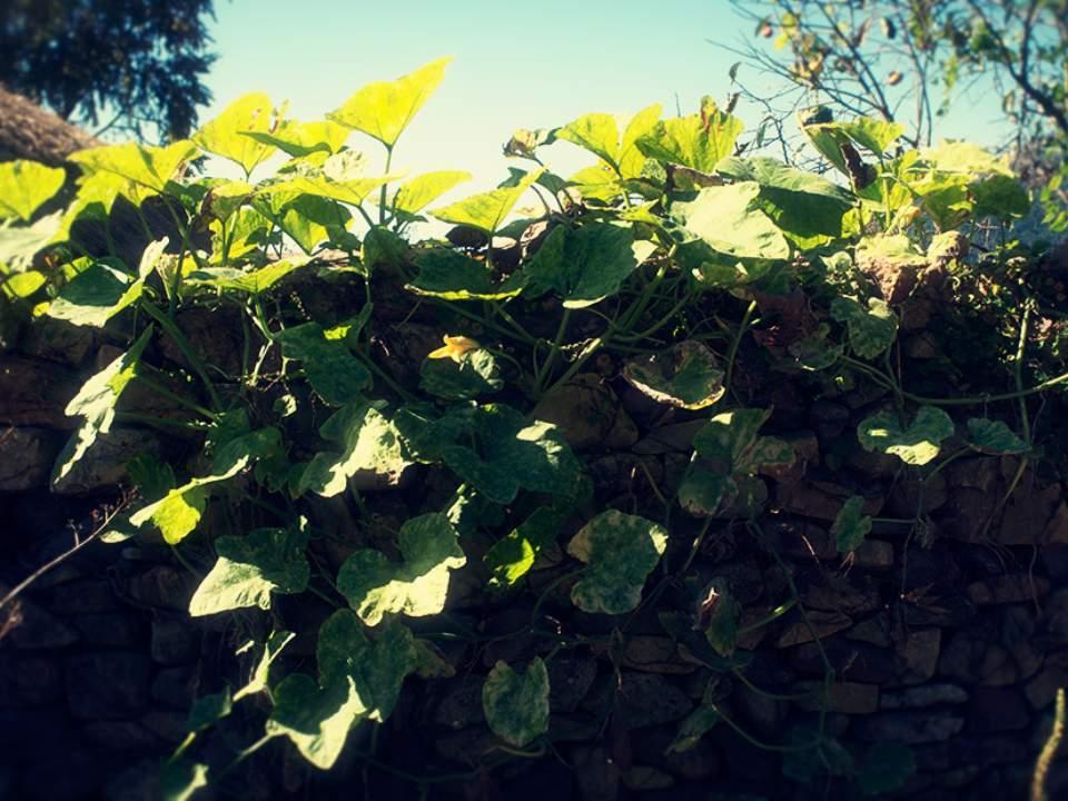 줄기와 잎