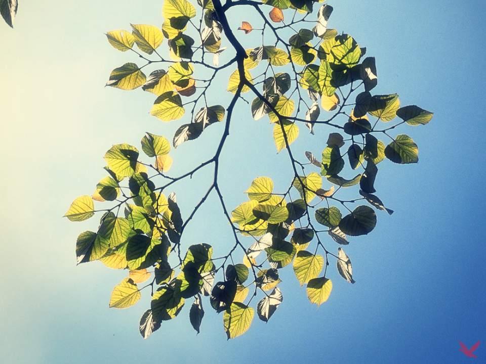 나무의 일부분