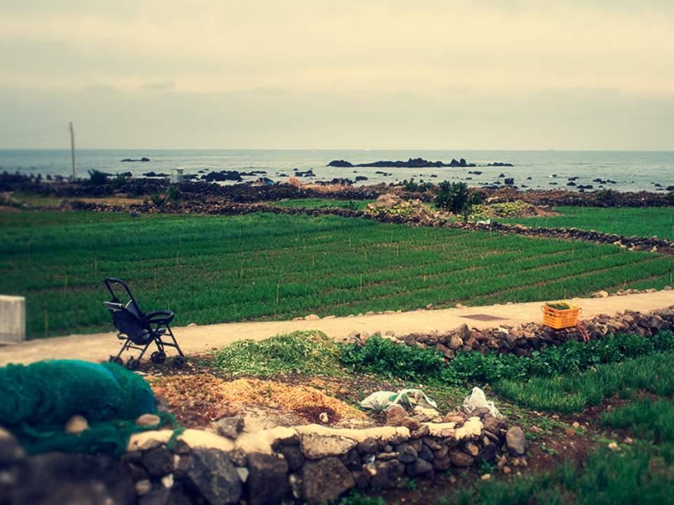 밭과 바다