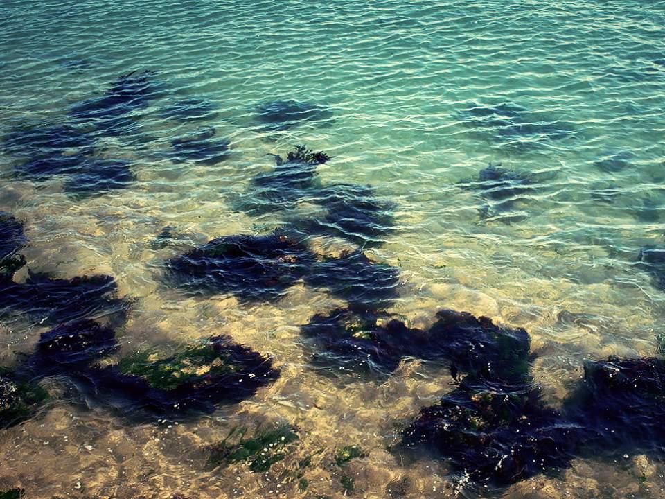 투명한 바다