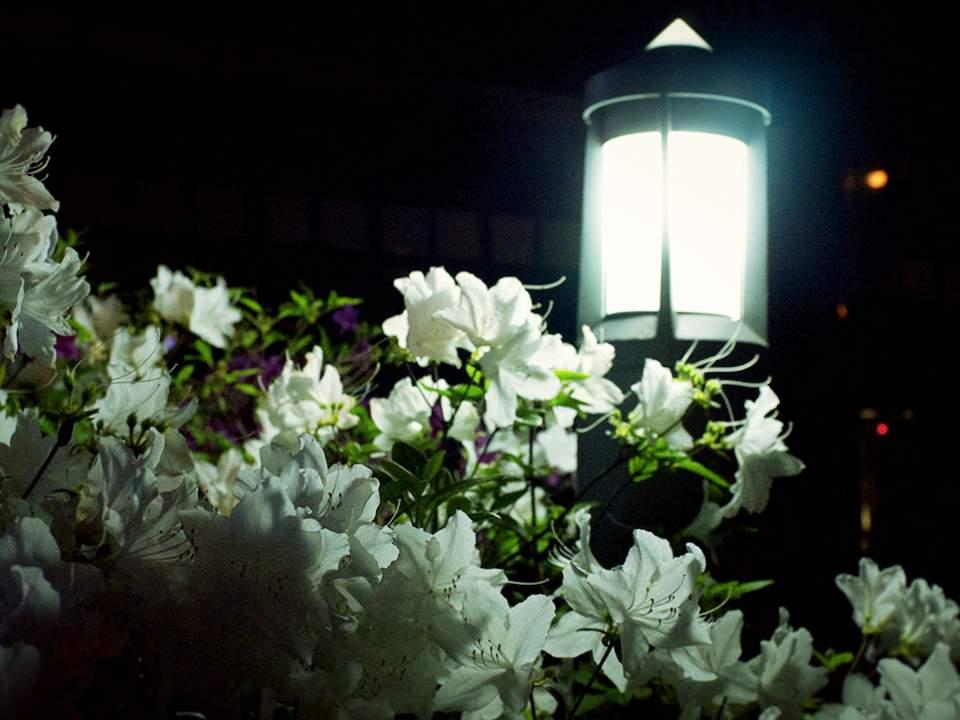 밤에서 본 식물