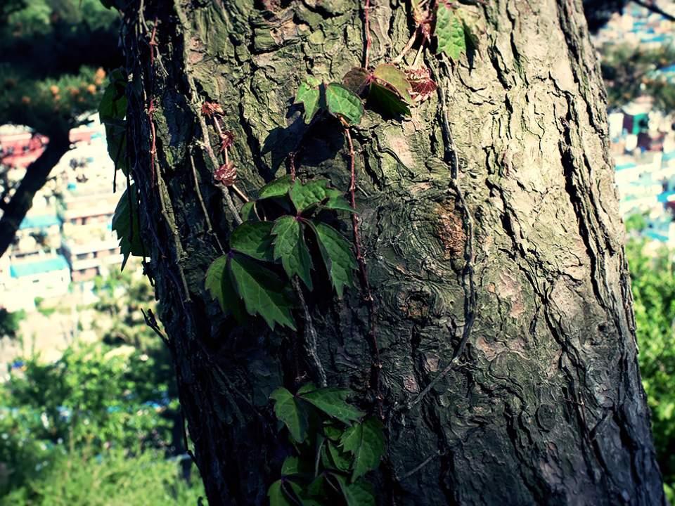 나무의 표면
