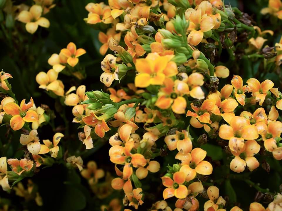 노랑 꽃들