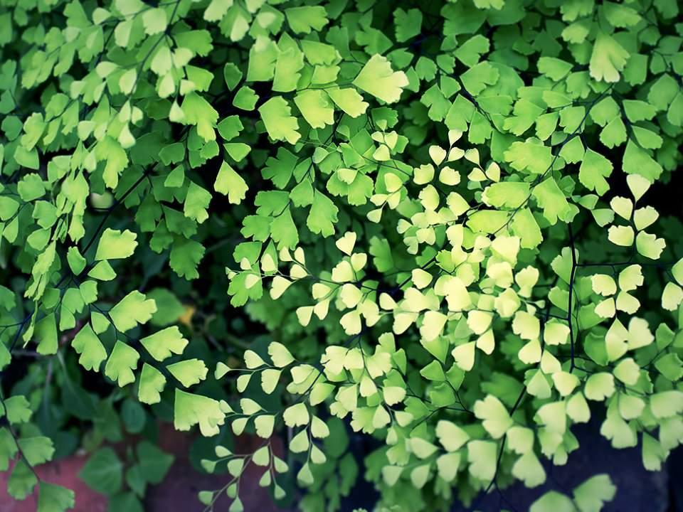 녹색의 밭
