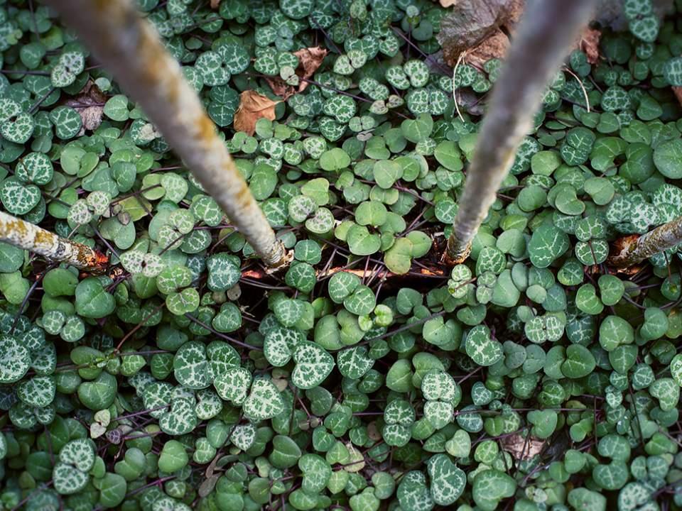 기둥 아래에 보이는 녹색 밭