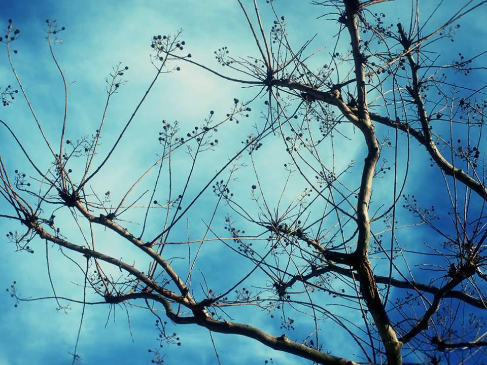 하늘과 가지