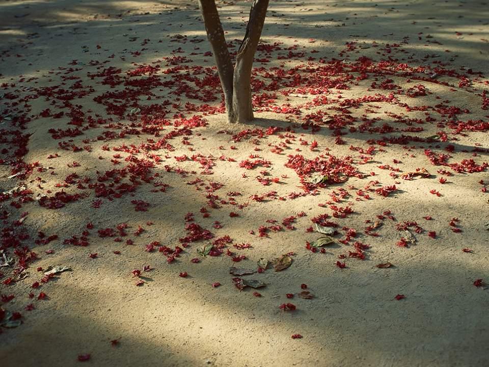 떨어져있는 붉은낙엽