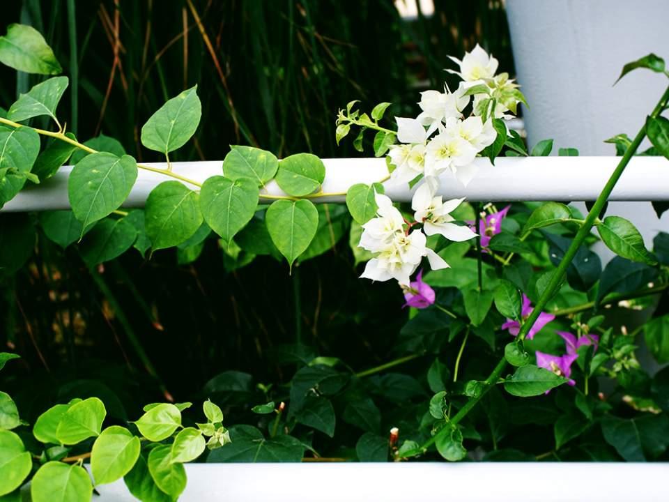 녹색 줄기와 꽃