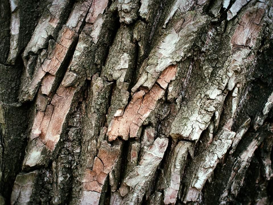 나무의 피부