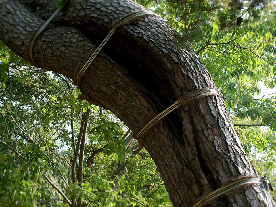굽어진 나무