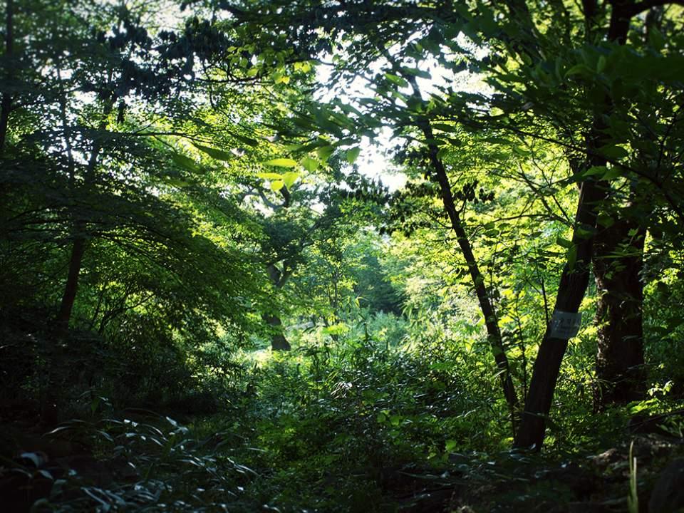 작은 숲속에서..
