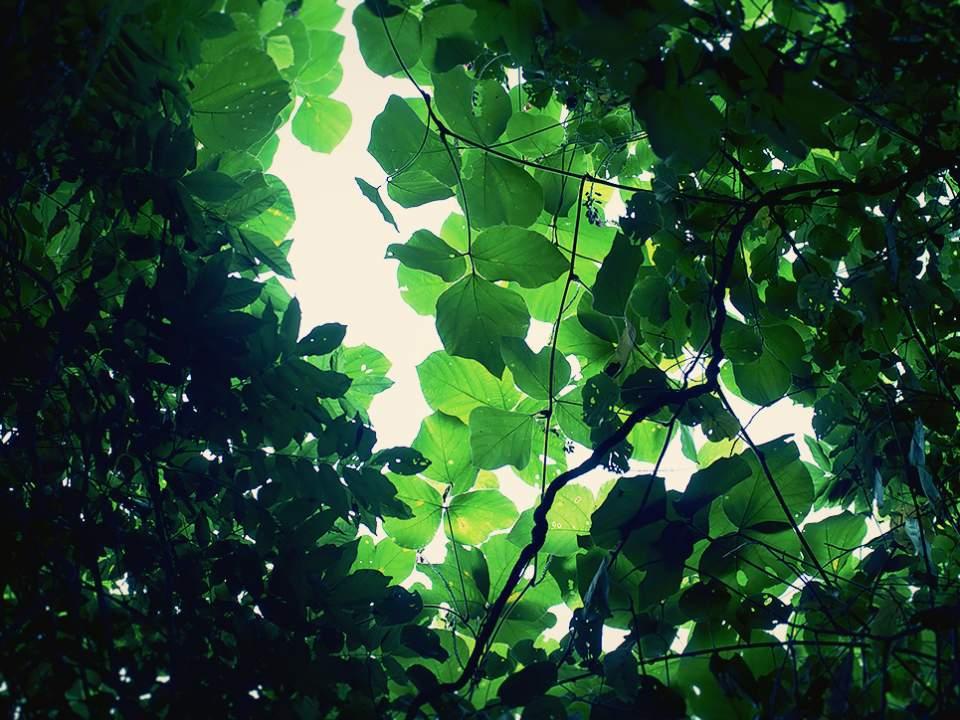 숲에서 본 작은부분