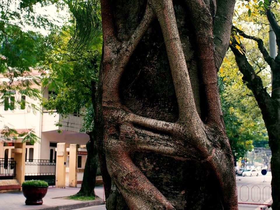 커다란 나무