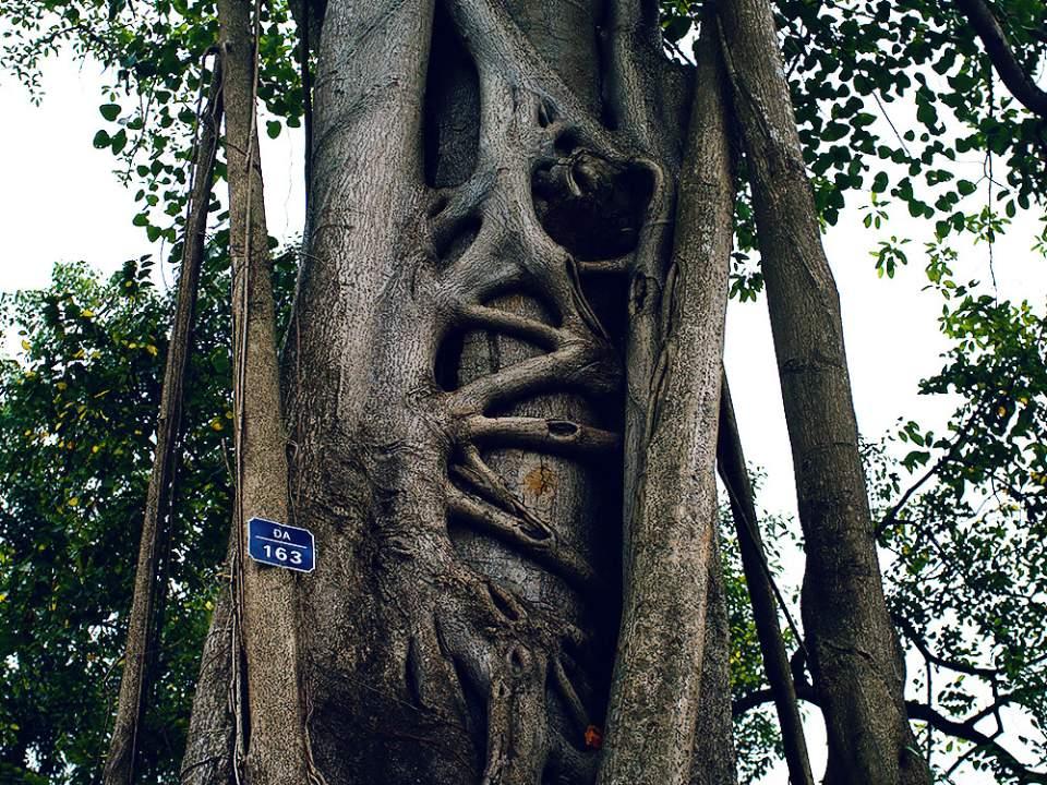 커다란 나무의 줄기