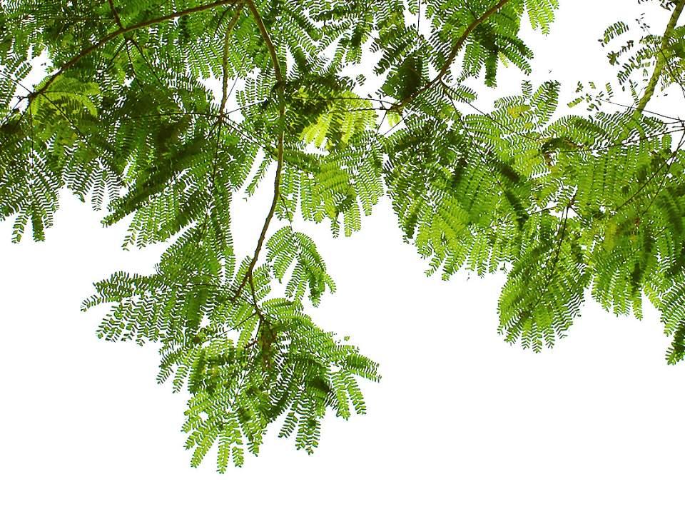 나뭇잎들..
