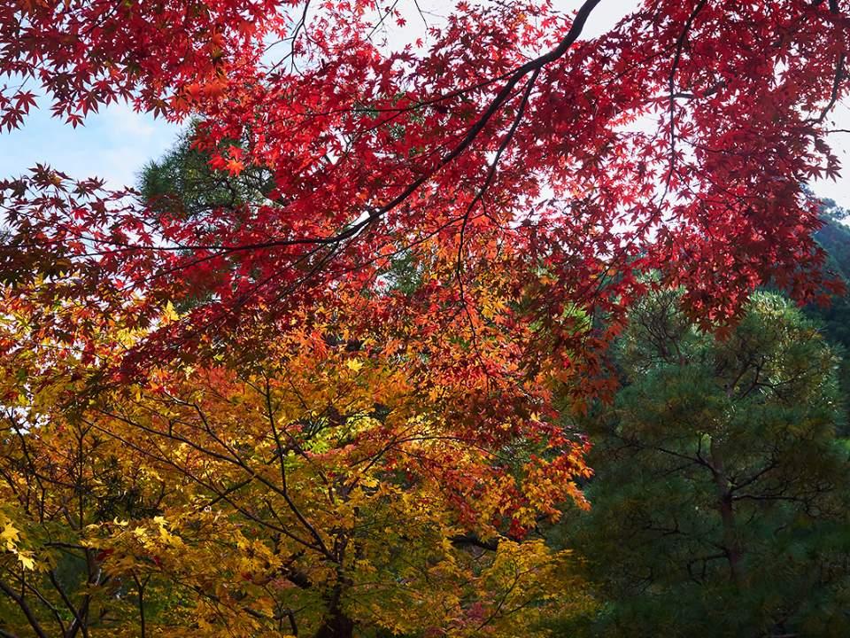 가을빛으로 물들때