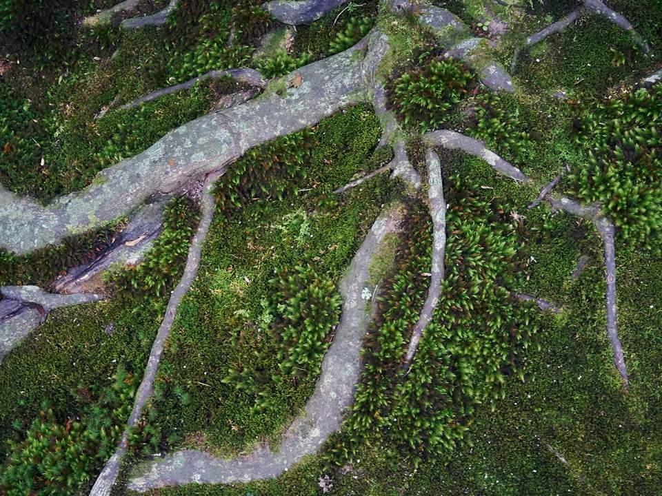 뿌리의 모습
