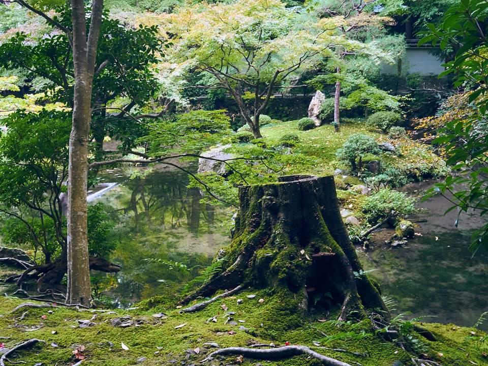 정원 근처의 숲속