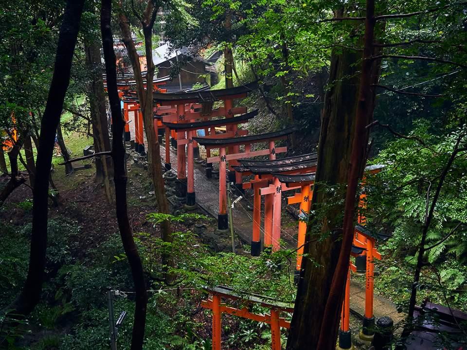 숲속의 모습