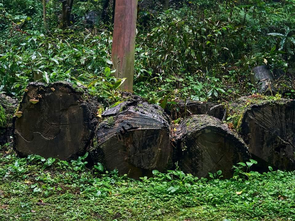 쌓여있는 나무들