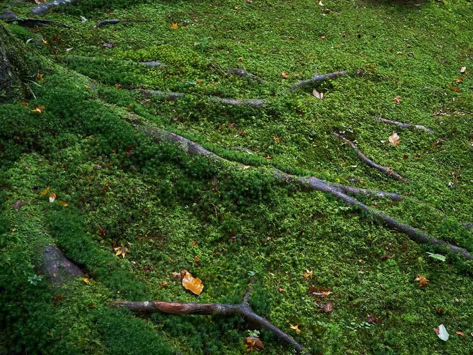 금각사 주변의 숲속 모습