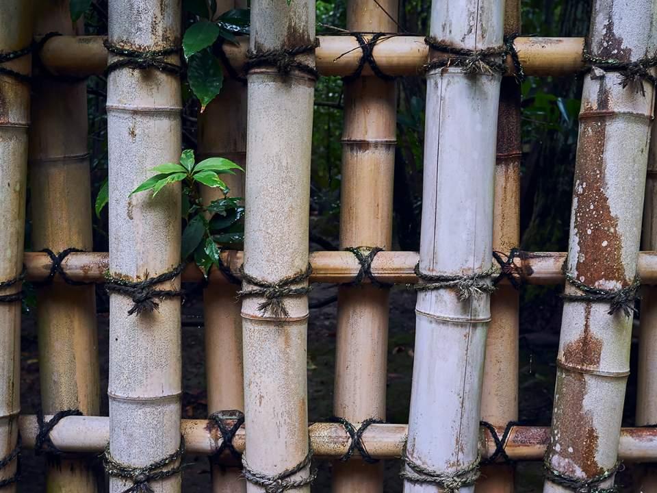 대나무의 사용