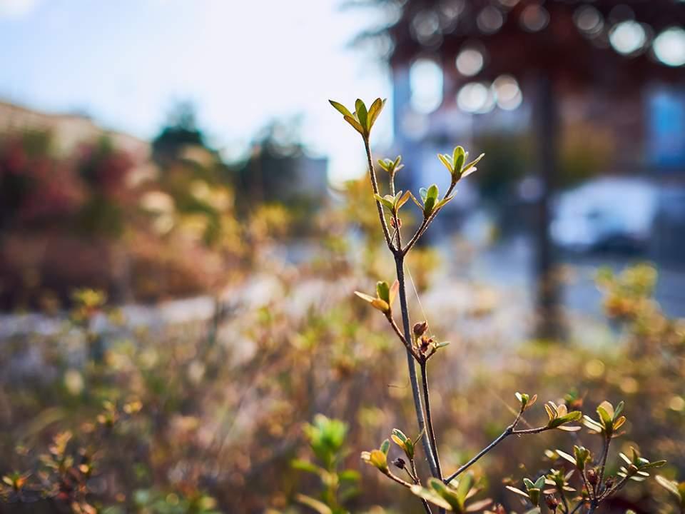 작은 잎의 모습