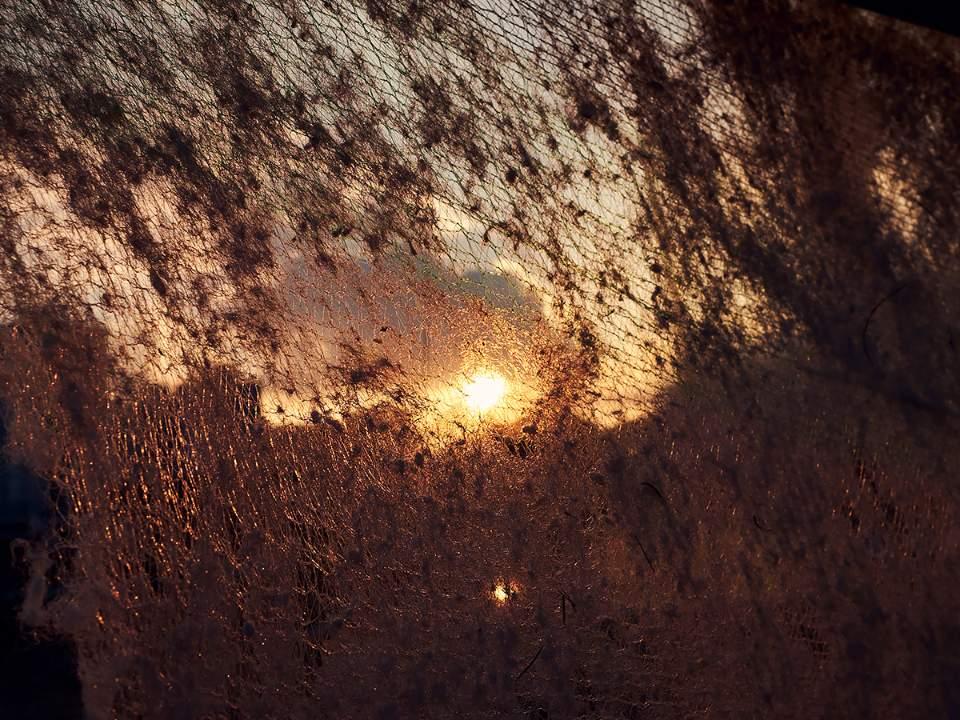 가려진 태양