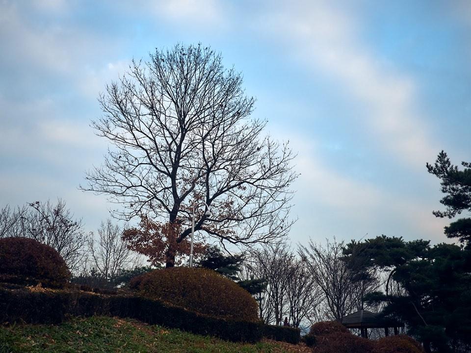 하늘과 나무