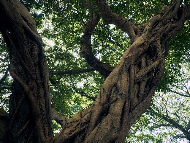 큰 나무의 줄기