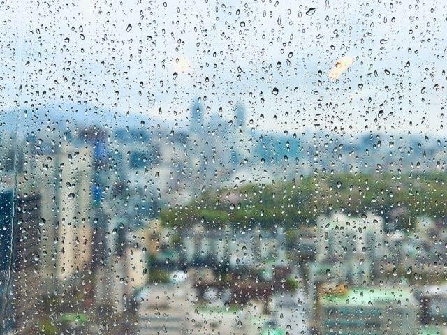비오는 날 바라보기
