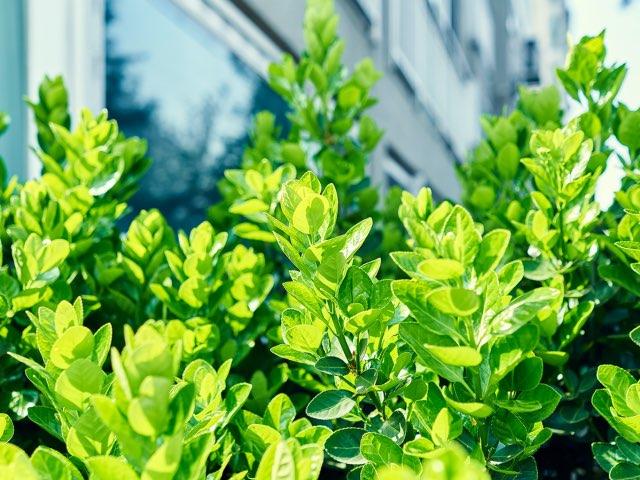 겹쳐지는 푸른잎들..