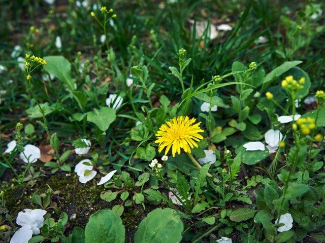 바닥에서 피는 작은 꽃