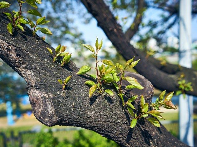 나무 줄기에서 생겨난 생명