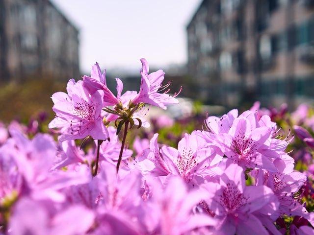 분홍색의 꽃들의 모음