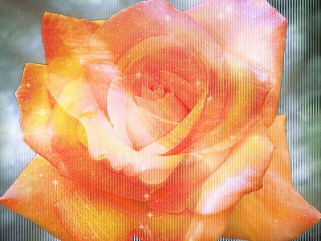 Rose's Girl