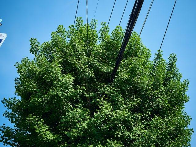 도로가의 나무