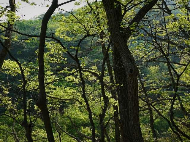 긴 녹색숲의 모습