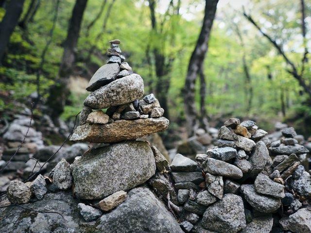 숲속에서 보는 작은 돌들의 모습