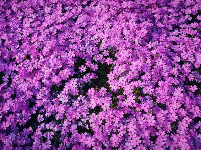 많은 자주색의 꽃들