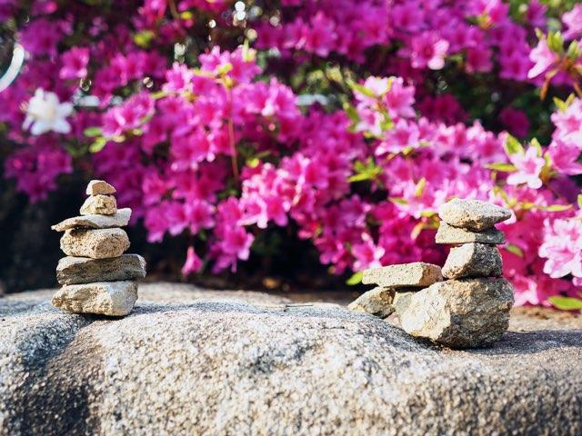 꽃들앞에 놓인 돌들