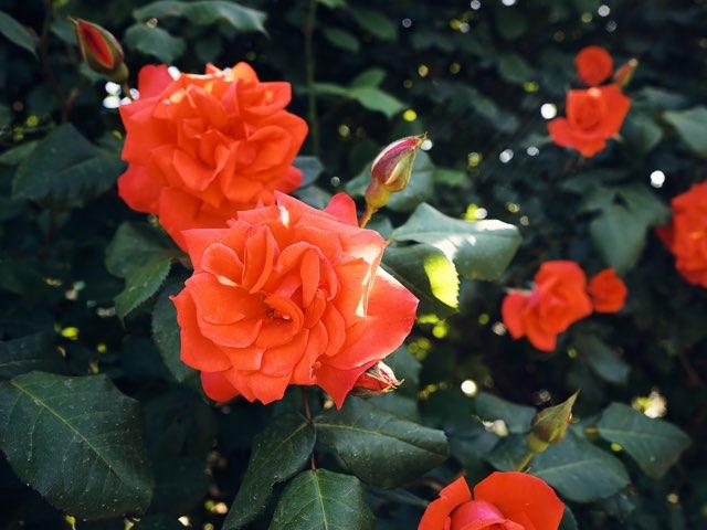 밝은곳에서 보는 붉은 꽃